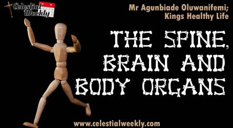 The Spine, The Brain and Body Organs